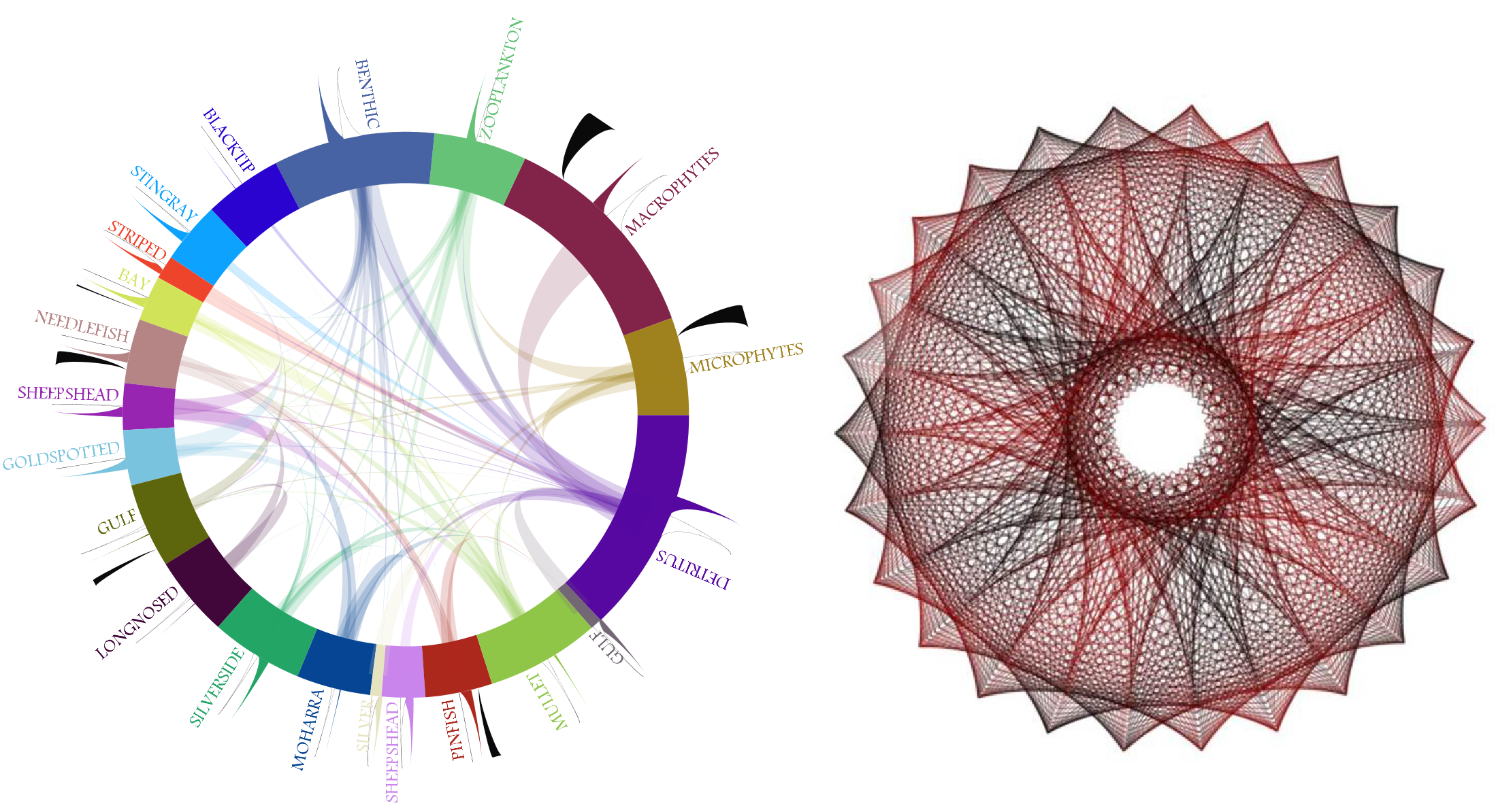 Aesthetic visualization of ecological networks, inspired by Spirograph